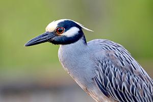 Bird on Twig at Cullinan Park