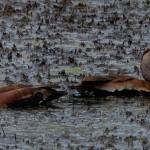 rain on mud at Cullinan Park