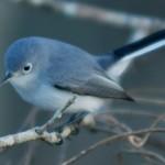 bird on branch in Cullinan Park