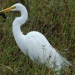 Crane in Cullinan Park