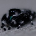 black spider close up