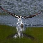 Bird swooping down