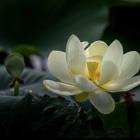 white flower dark background