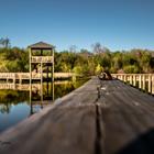 snail on lake dock