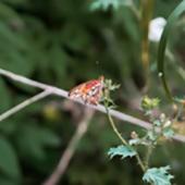 orange butterfly on branch